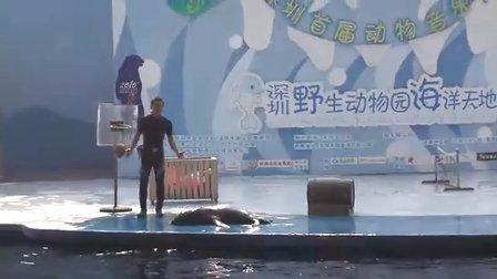 深圳野生动物园海洋天地表演