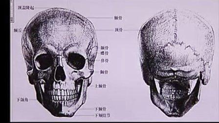 头部造型结构-头部骨骼(人体解剖与结构讲座)