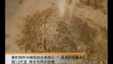 中央台-鲁西黄牛养殖技术-山东嘉州牧业视频