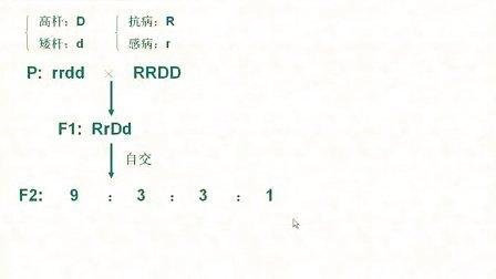 汉水丑生  高中生物 染色体变异