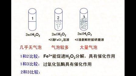 汉水丑生  高中生物  必修一  酶(一)