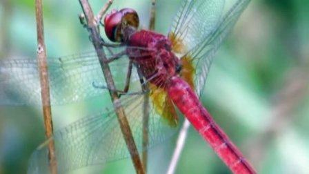 cad蜻蜓素材