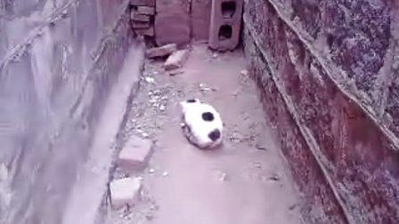 可爱小猫咪玩老鼠