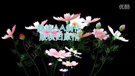 新邓丽君王静  山茶花>