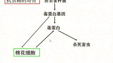 汉水丑生  高中生物 必修二 从杂交育种到基因工程