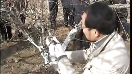 费县桃树冬季整形修剪技术