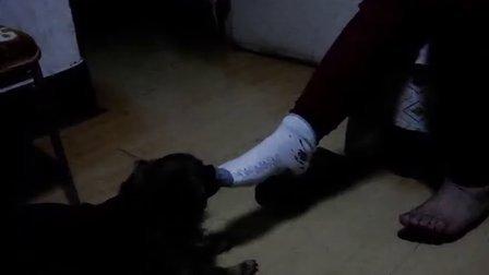 袜子娃娃制作图解步骤小狗