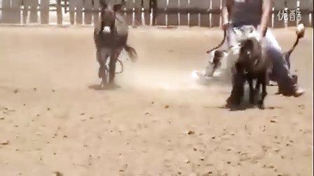 美女骑矮马 vs 美女骑驴