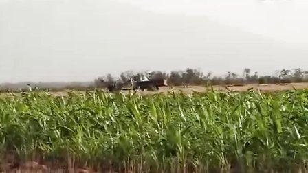 弹弓打野鸡视频 超牛