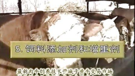 最新肉牛饲养技术营城子黄牛交易市场西门塔尔牛繁育中心视频