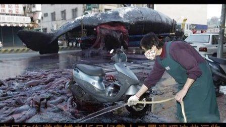 """惊爆!50吨巨鲸离奇自爆 大街行人遭受""""血雨腥风""""!"""