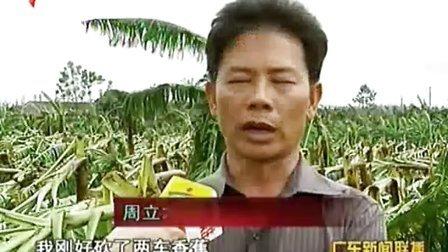 """""""纳莎""""重创湛江农业 110930 广东新闻联播"""