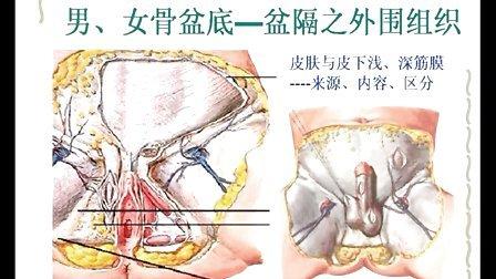 犬类解剖咽喉结构图