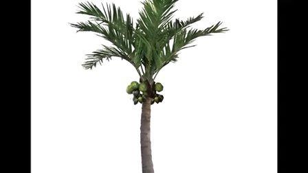 仿真椰子树批发零售进口保鱼棕榈树保鲜椰子树1892748385