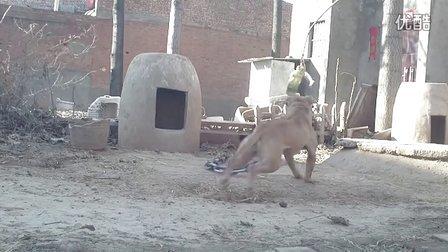 视频-四海犬舍,的频道-优酷视频