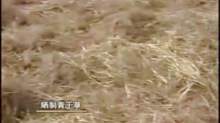 �m州提�h波��山羊小尾寒羊湖羊�B殖��鋈庋蝠B殖技�g��l