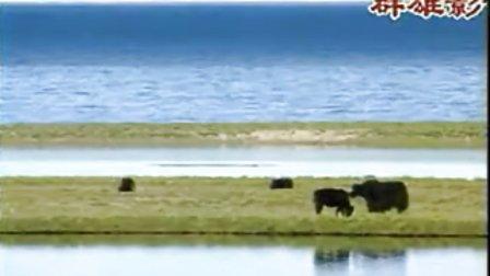笛子曲 小放牛avseq01视频