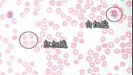 生物实验二:用显微镜观察人血涂片