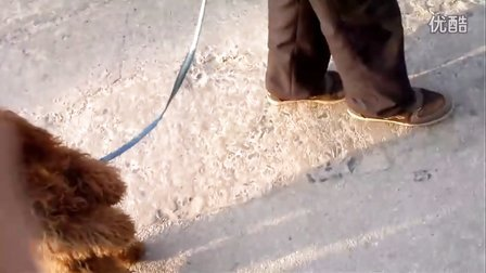 两只脚走路的狗狗