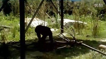 两只可爱的黑猩猩