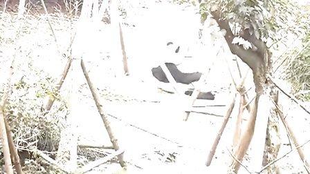 超可爱熊猫吃竹子