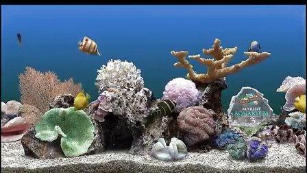 壁纸 海底 海底世界 海洋馆 水族馆 桌面 448_252
