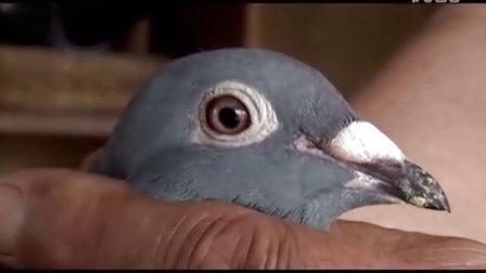 频道-搜鸽网的自视频-优酷视频甘谷在线视频图片