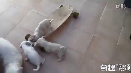 狗狗的滑板练习...