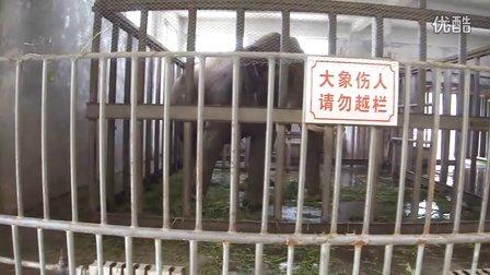 专辑:西安秦岭野生动物园