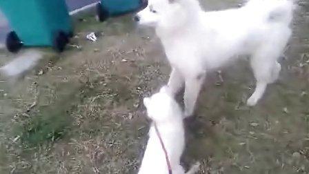 狐狸步骤图解教程