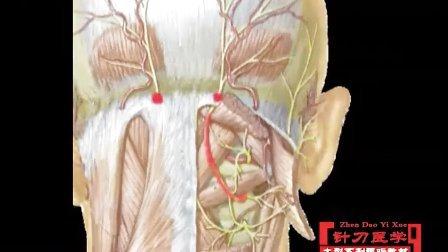 针刀医学 局部解剖第2集 3 枕大神经卡压综合症视频