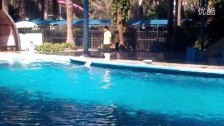 南宁动物园白海豚表演