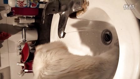 小猫剪纸步骤图解