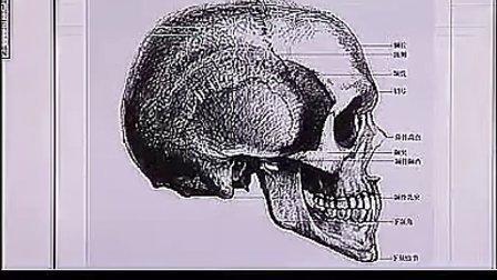 艺用人体解剖全身结构与素描速写技法