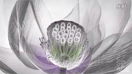 卫生纸折莲花步骤图解