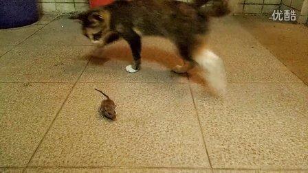 动物保护自己的奇招