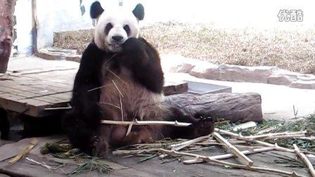 专辑:长隆动物园