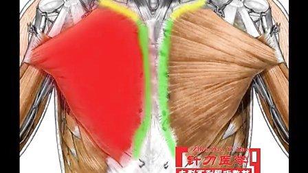 舌头的解剖结构图片