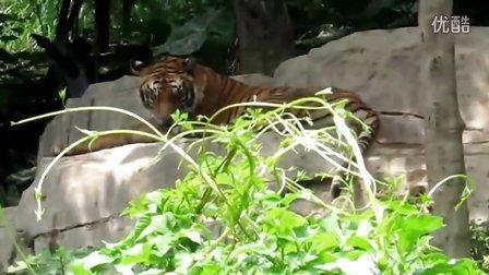 专辑:长隆动物园自驾游区