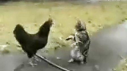 (爆笑)搞笑动物打架