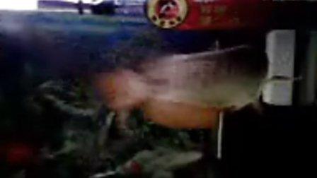 金龙鱼2008年1月23日手机拍摄