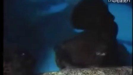 动物繁殖 - 专辑 - 优酷视频