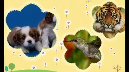 专辑:可爱的小动物