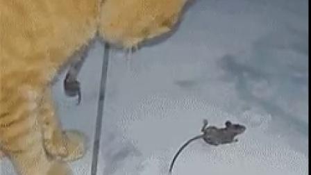 装死的老鼠@轻松时刻编辑部