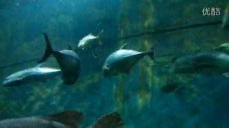壁纸 动物 海底 海底世界 海洋馆 水族馆 鱼 鱼类 448_252