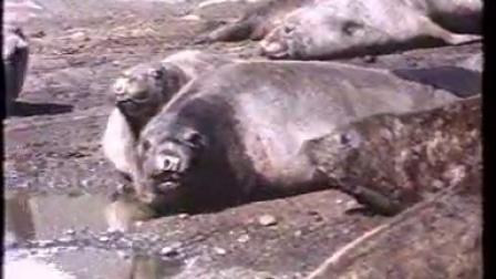 南极洲的动物