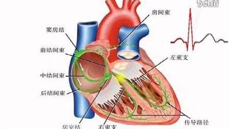 心脏传导示意图