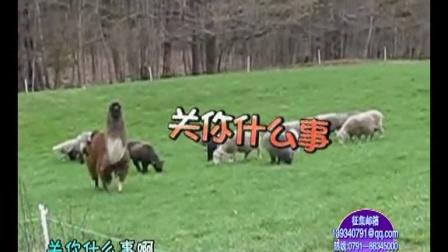家庭幽默录像 动物频道