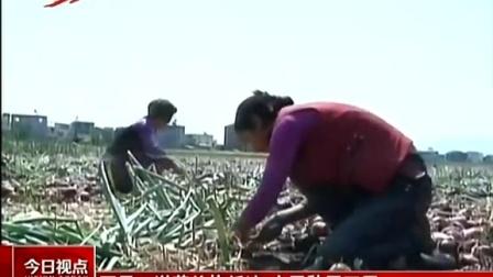 西昌:洋葱价格低迷 农民愁眉不展 今日视点 20140424 标清