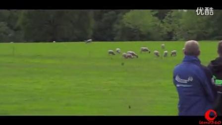 世界顶级飞手遥控直升机3D特技暴力飞行 炸机精选视频
